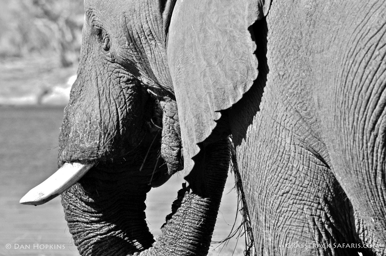 WILD ELEPHANT AFRICAN SAFARIS