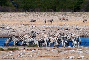 namibia etosha safaris