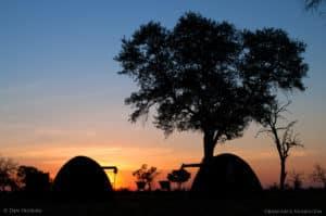 botswana photography wildlife safari