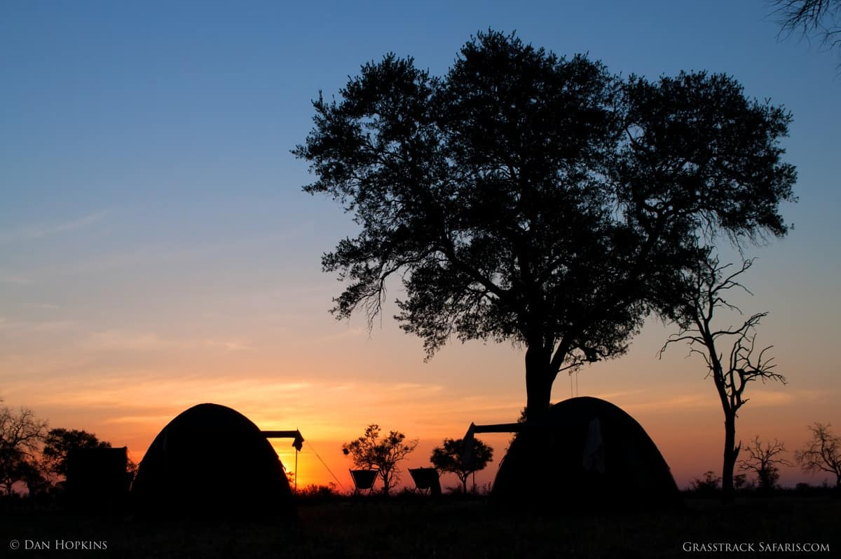 botswana photography wildlife safari