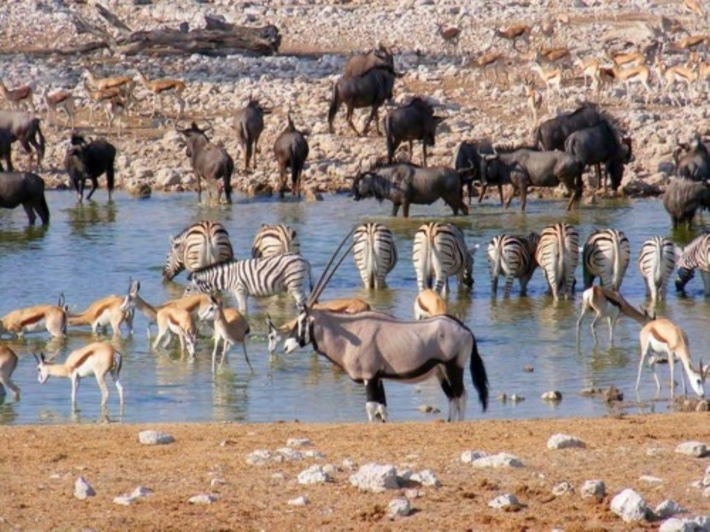 namibia explorer safari