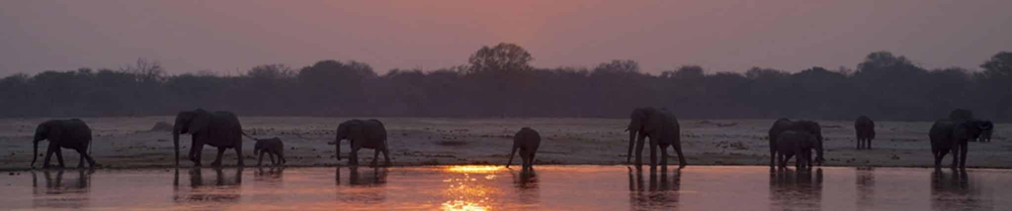 zimbabwe elephant safari