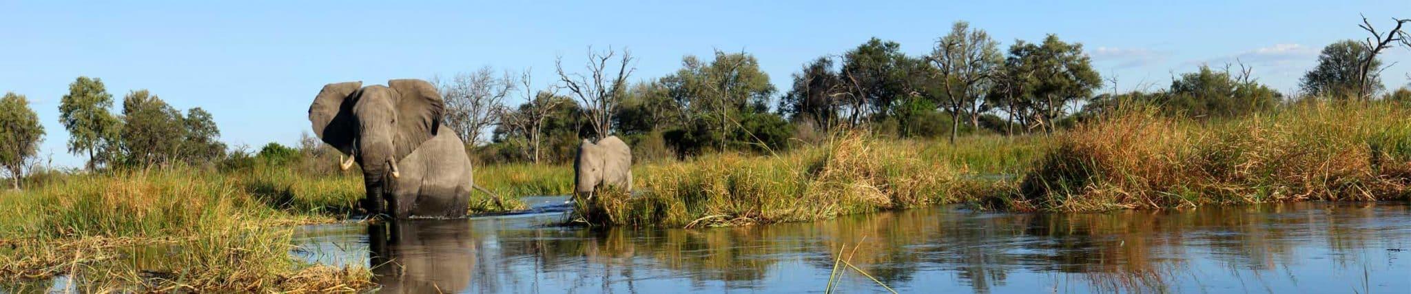 botswana elephant moremi