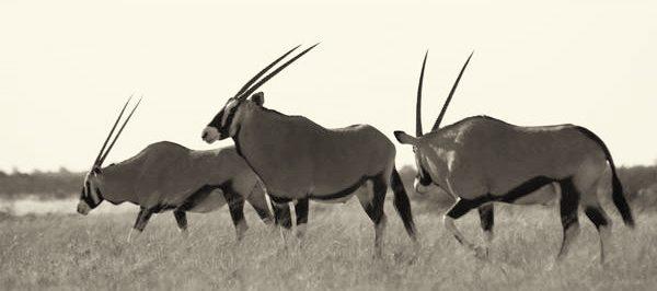 kalahari safari