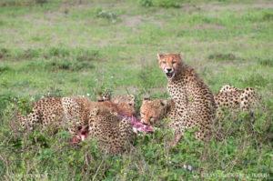 tanzania safari report