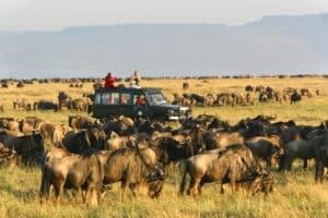tanzania safari