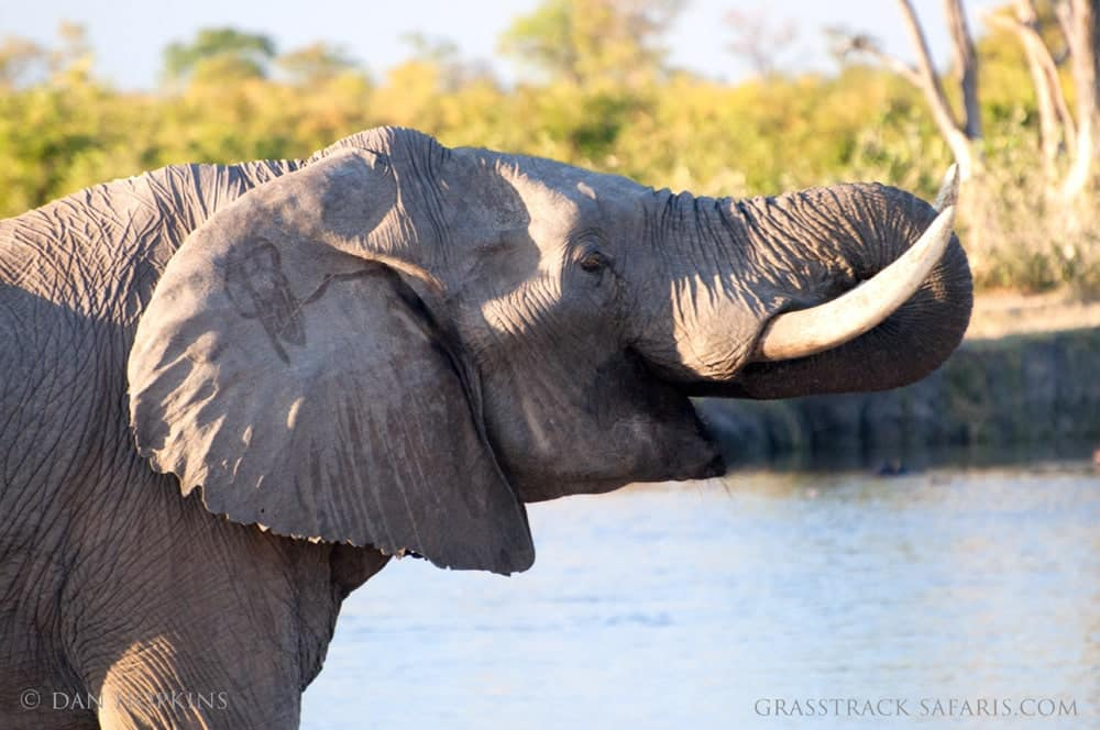 living with wild elephants