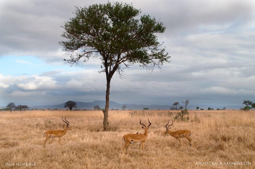 Impala, Mikumi