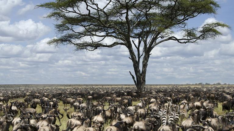 Serengeti 2 13