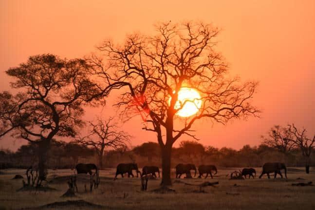 Elephants, Hwange