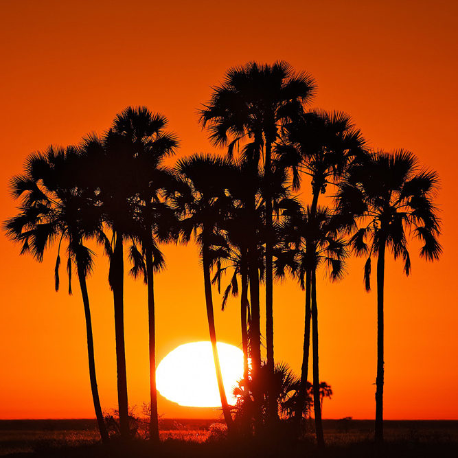 Setting sun in the Makgadikgadi Pans. Located in the Central district of Bostwana, the pans  were the site of a former super lake and are now part of the route of southern Africa's largest remaining migration.