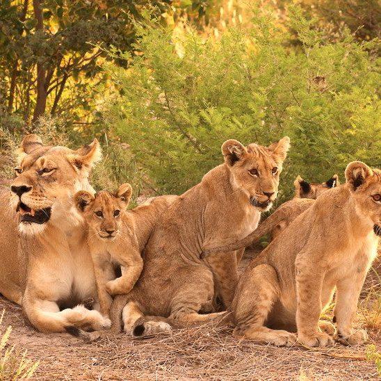 Botswana African Safari